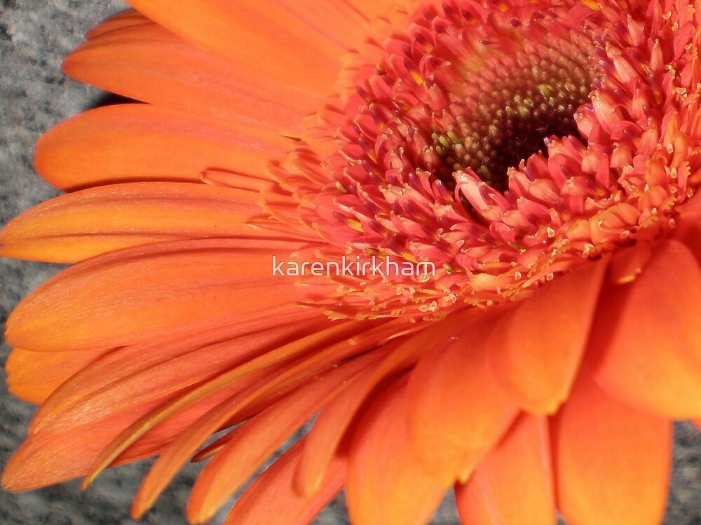 Orange Gerbera macro 2 by karenkirkham