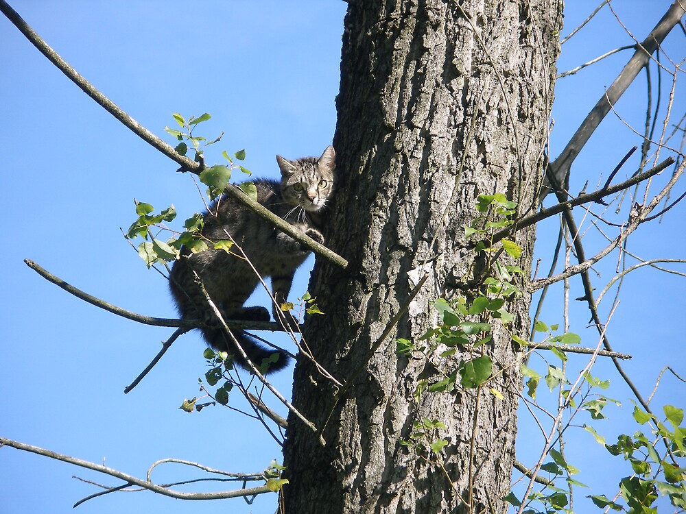 cat on tree 4 by kveta