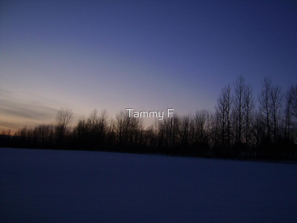 Winter Dusk by Tammy F