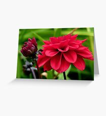 National Flower Of Mexico - Red Dahlia - NZ Greeting Card