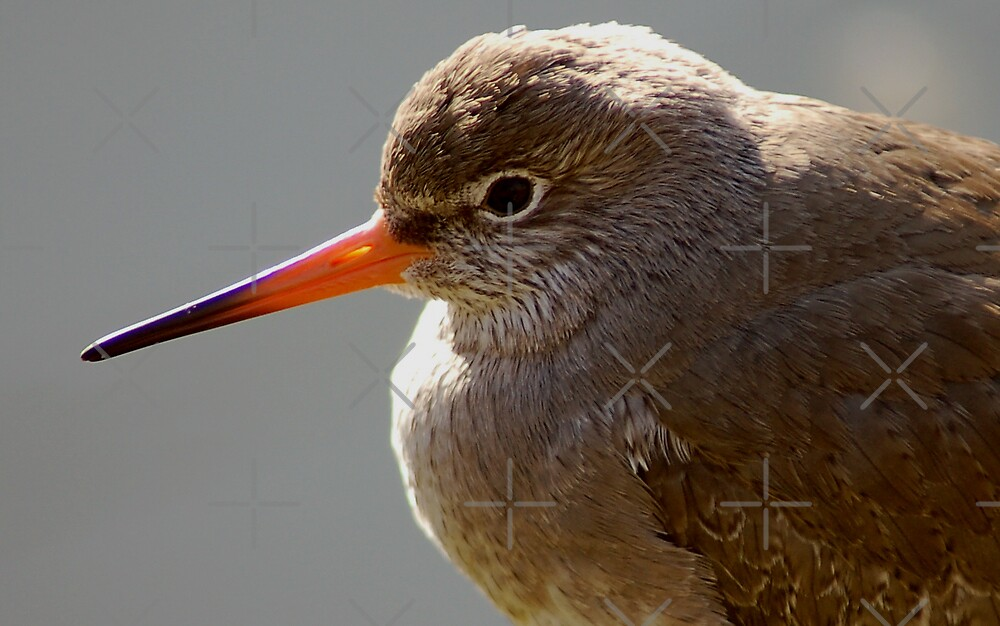Close Up Bird by ApeArt