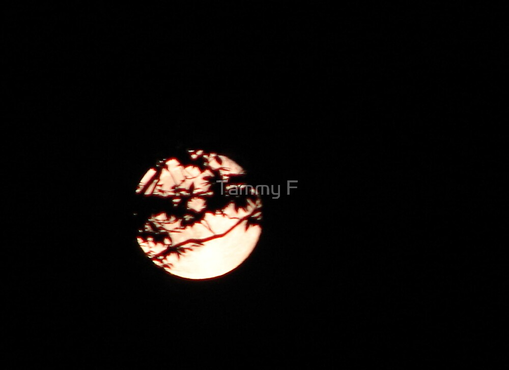 Moon Behind the Trees by Tammy F