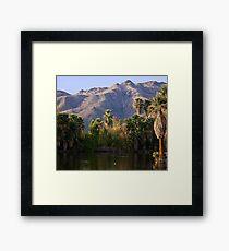 Palm Trees at Aqua Caliente Framed Print