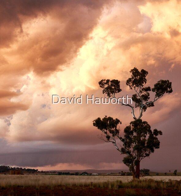 Sunset gum by David Haworth