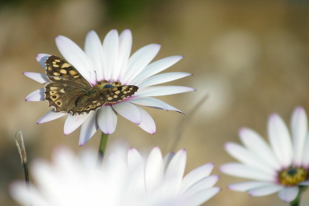 Butterfly by Michael Walton