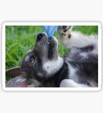 Wolfdog Puppy Play Sticker