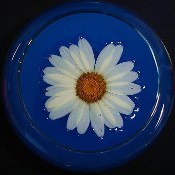 flower by ralukatudor