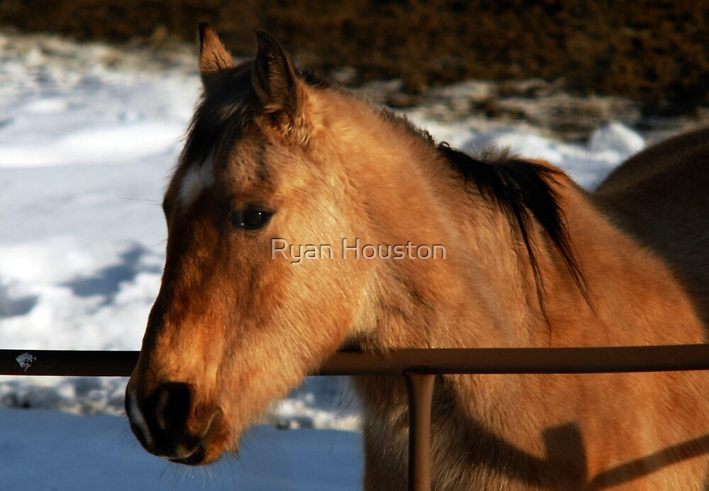 Tan Horse by Ryan Houston