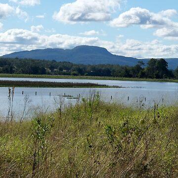 Wetlands, Wallace Crk by warhorse