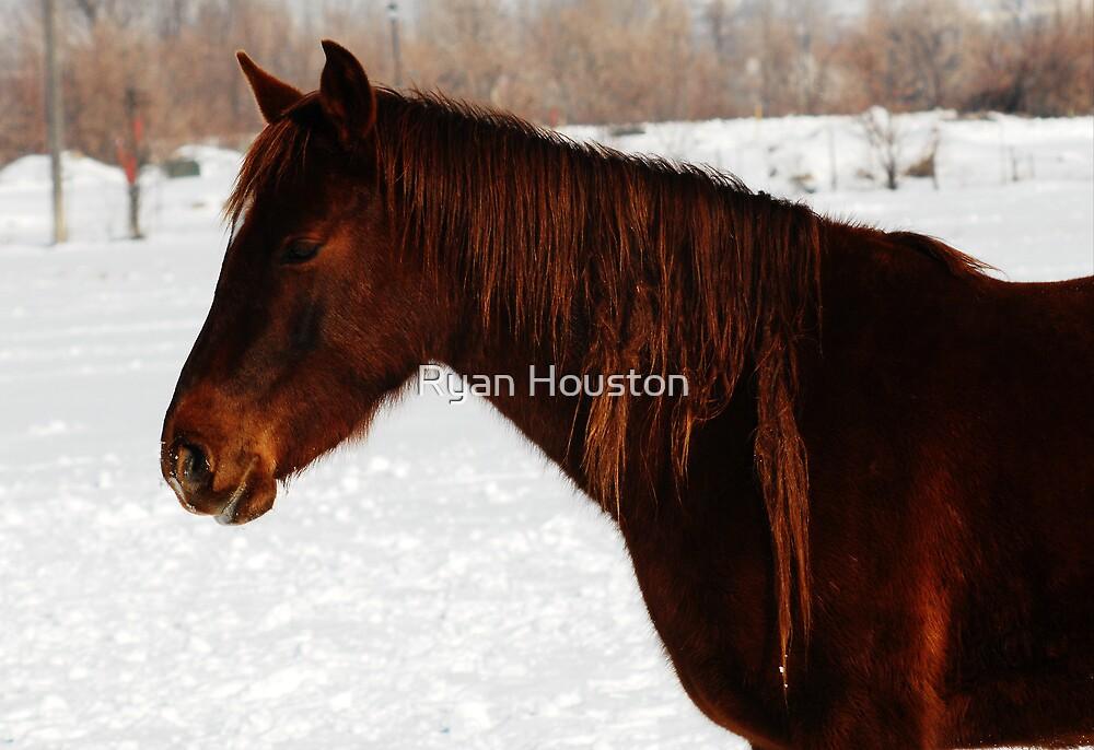 Red Horse - Dread Locks by Ryan Houston