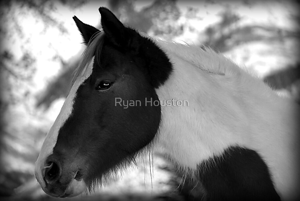 Horse - Black and White by Ryan Houston
