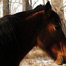 Horse Art by Ryan Houston