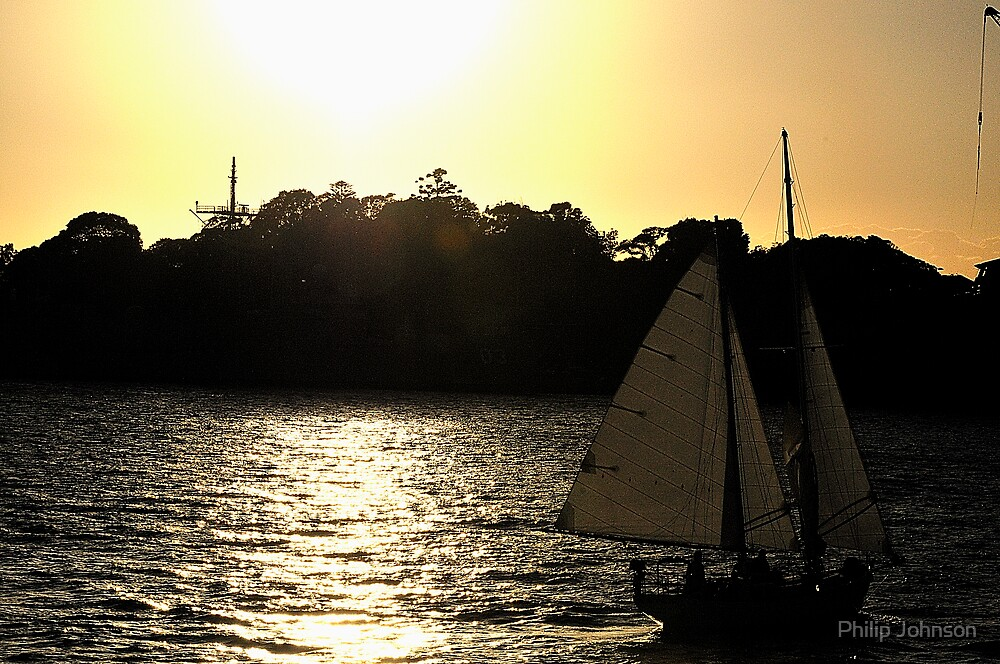 Sailing Into Glory -Sydney Harbour Sydney Australia by Philip Johnson