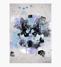 Watercolor Husky Photographic Print