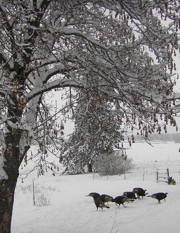 Winter wildlife by twohorses