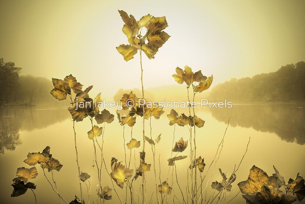 Reaching by jan lakey © Passionate Pixels