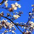 Blossom 2 by Michelle Dry