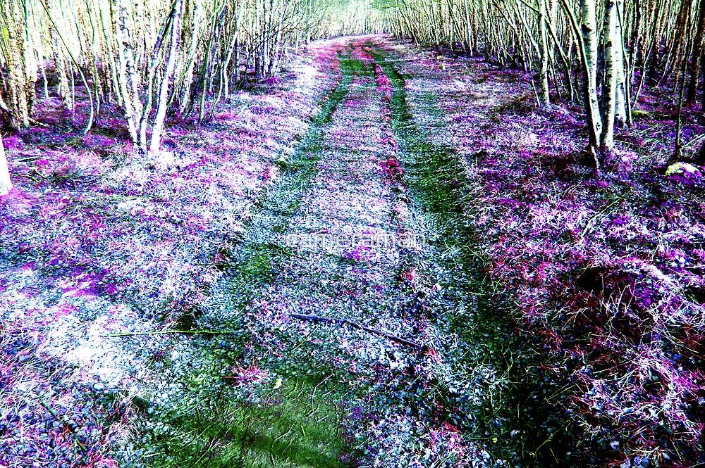 violet lane by cameraman
