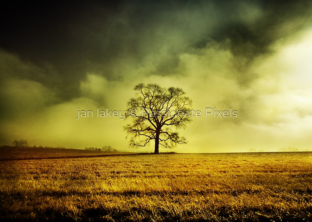 Easy Silence by jan lakey © Passionate Pixels