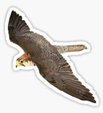 Laner Falcon in flight Sticker
