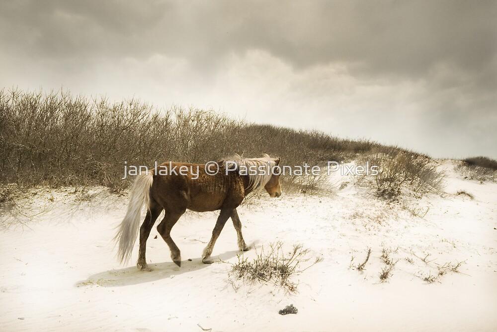 my little pony by jan lakey © Passionate Pixels