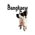 Bangkaew - A Pedigree Breed from Thailand by Thinglish Lifestyle