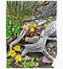 Wildflowers And Old Logs Poster