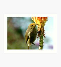Natural Pollen Highlights! - Bellbird - Southland Art Print