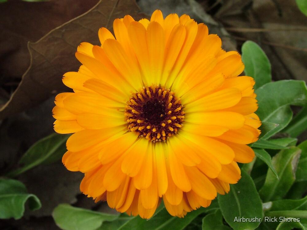 flower by Airbrushr  Rick Shores