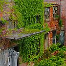 An Entropic Arboretum by Steven Godfrey