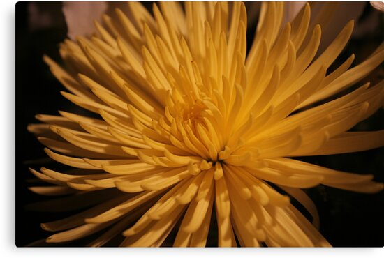 flower by noahrsd