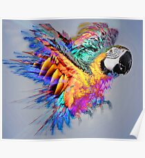 Macaw colour burst Poster