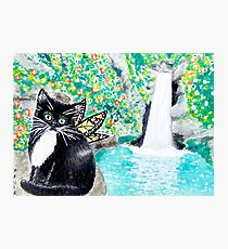 Tuxedo Fairy Cat with Waterfall Photographic Print