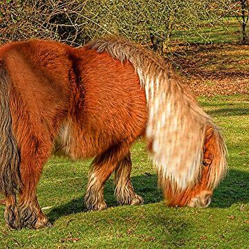 Shetland Pony by Dalyn