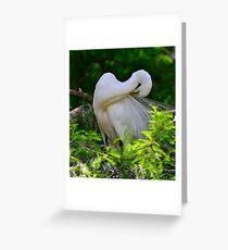 Egret Beauty Greeting Card