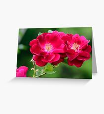 Two Red Heritage Roses Greeting Card