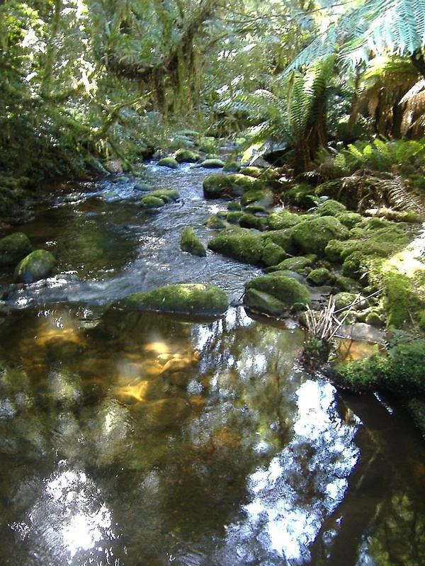 rainforest by emmagene