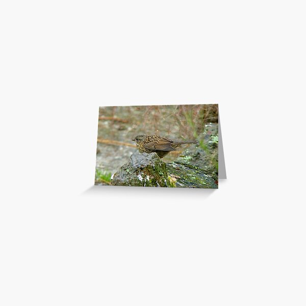 I'm Allowed To Practice Polyandry - Dunnock Hedge Sparrow Greeting Card