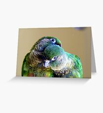 Cuddles - Maroon-bellied Conure - NZ Greeting Card