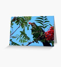 Berry Happy Blackbird - Juvenile Blackbird - NZ Greeting Card