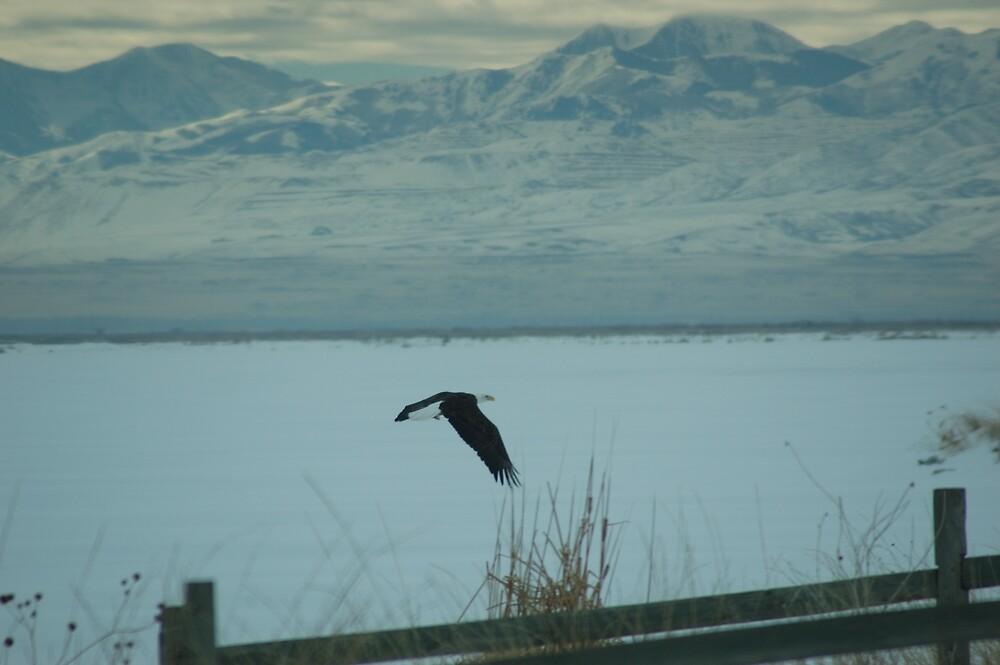 The Eagle is Landing by dbabbler
