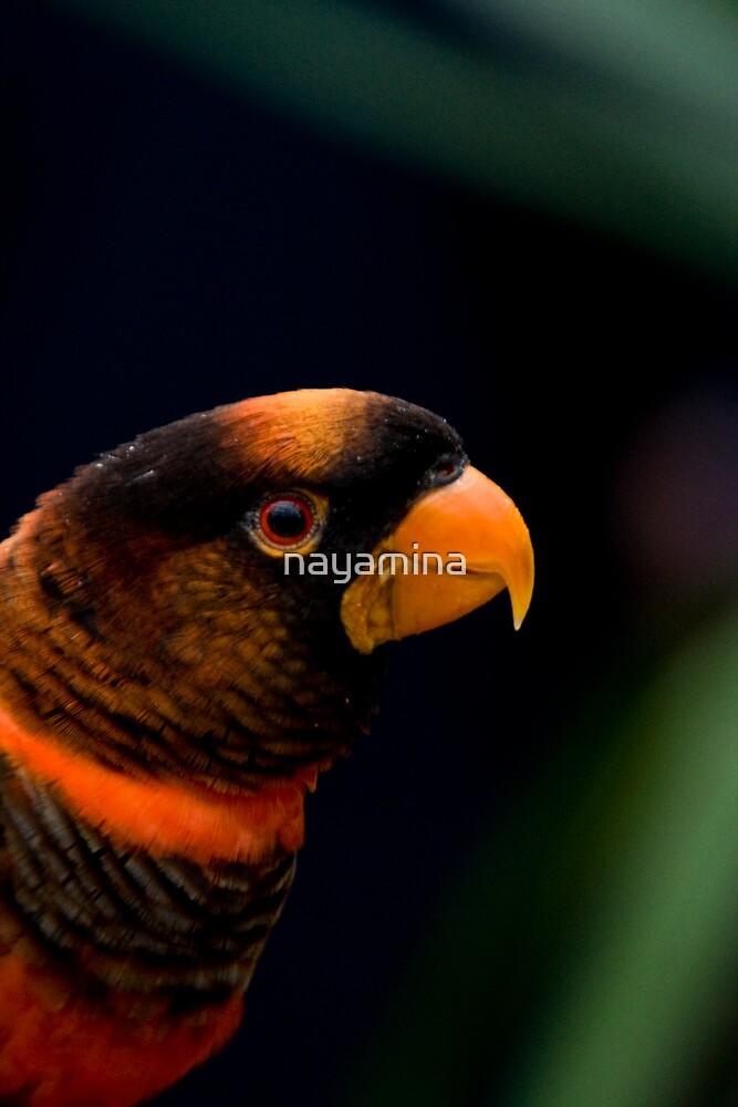 Colourful Bird Side profile by nayamina