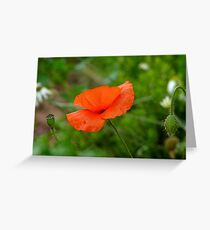 Three Generations! - Red Poppy - NZ Greeting Card