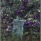 The Hitching Post Lilac by Wayne King