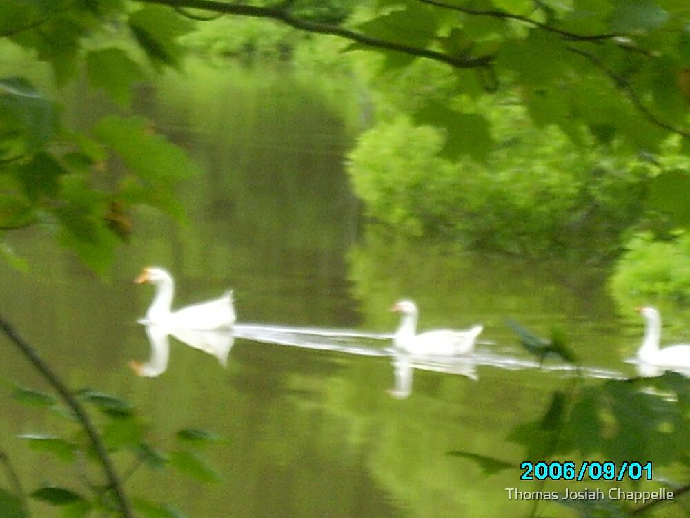 Big dux n the pond by Thomas Josiah Chappelle