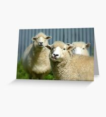 Stop Licking Your Chops! - Sheep - NZ Greeting Card