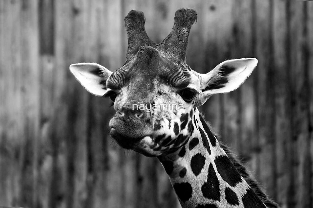 Giraffe face portrait by nayamina