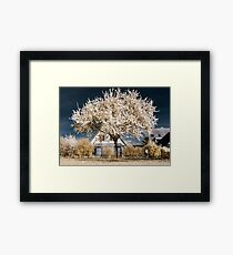 Single blooming cherry tree in infrared view Framed Print