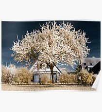 Single blooming cherry tree in infrared view Poster