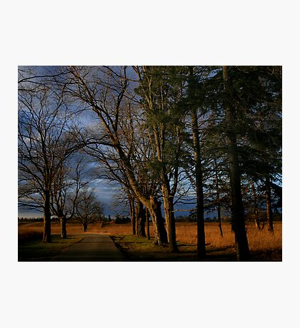 Tree-Lined Drive Photographic Print
